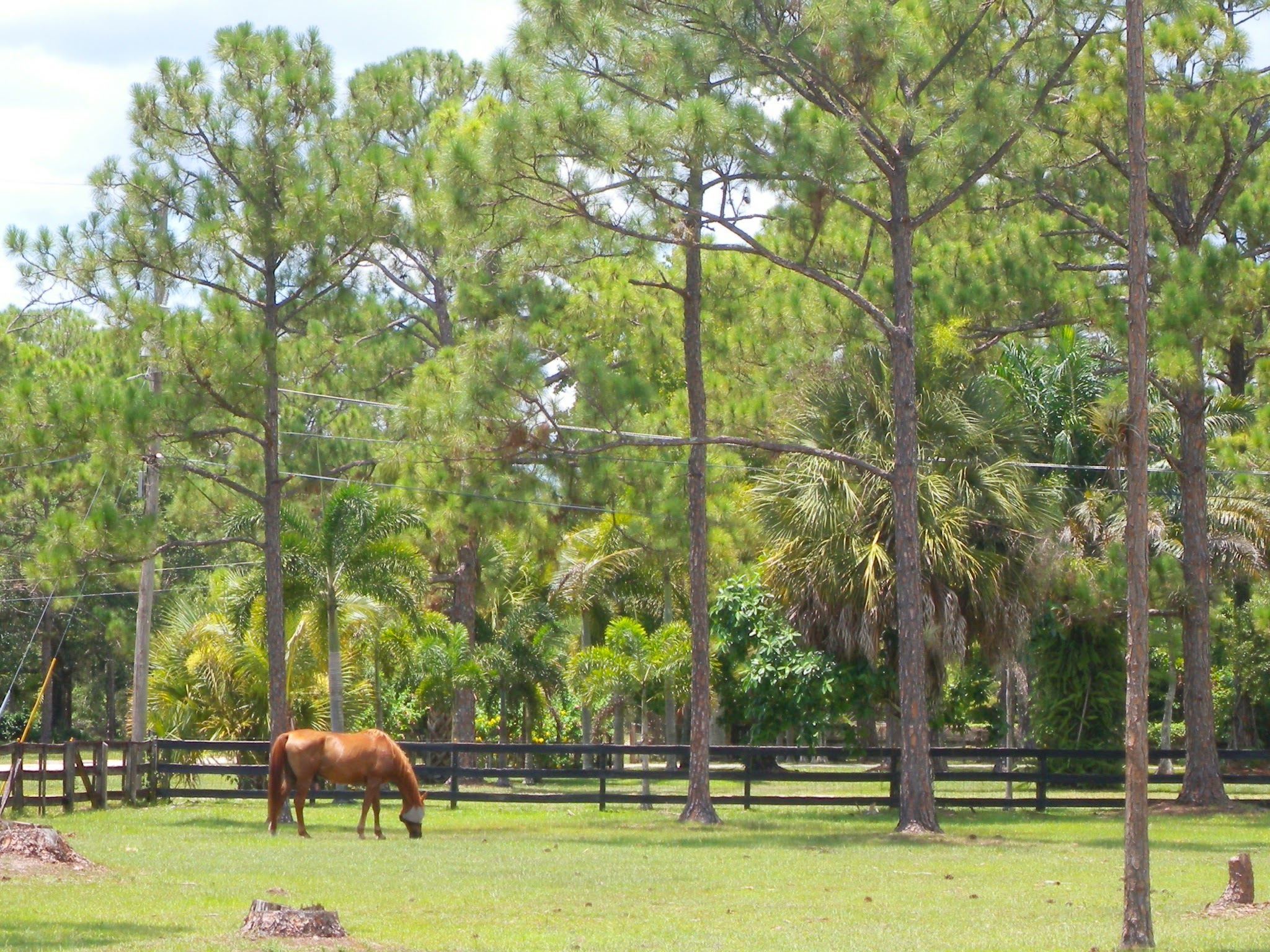 Loxahatchee Homes With Paddocks For Sale