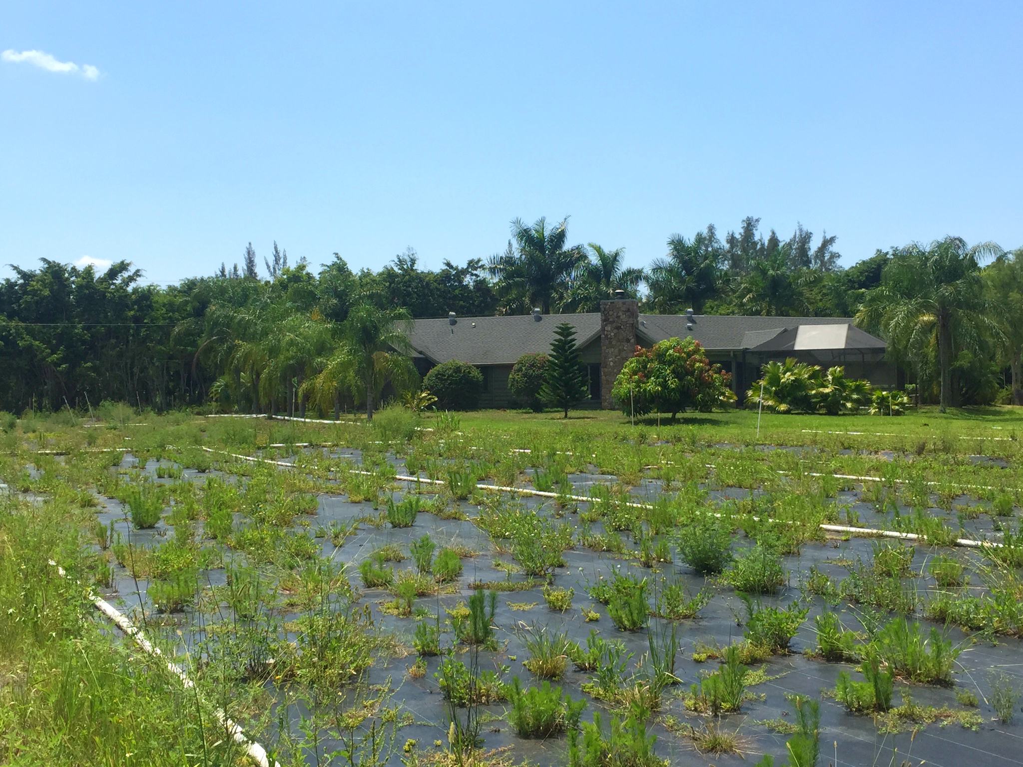 Loxahatchee Groves Homes For Sale Florida IPI International Properties and Investments LLC